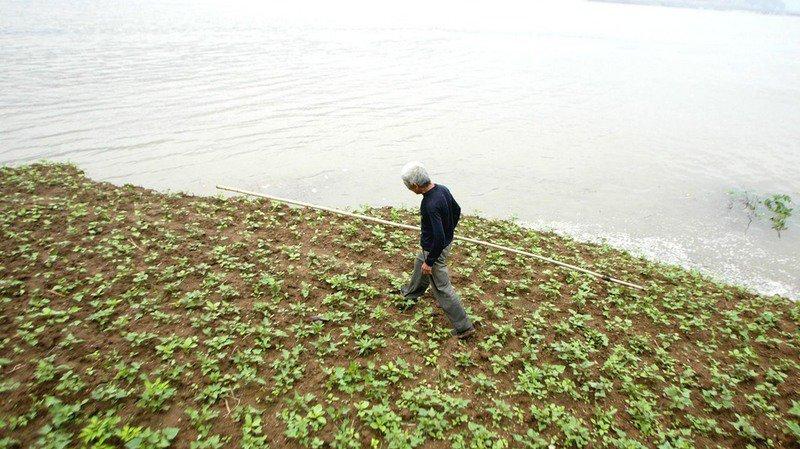 Sécheresse: l'Agroscope teste la culture de patates douces en Suisse
