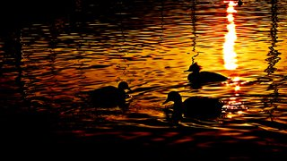 _mg_3151_gold_water